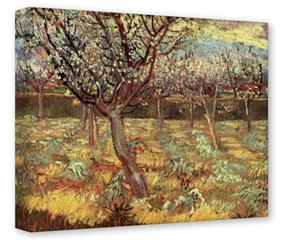 Gallery Wrapped 11x14x1.5 Canvas Art - Vincent Van Gogh Apricot Trees In Blossom2