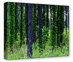 Gallery Wrapped 11x14x1.5 Canvas Art - South GA Forrest