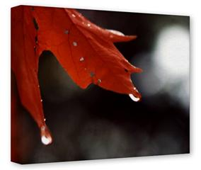 Gallery Wrapped 11x14x1.5  Canvas Art - Dripping Leaves